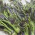 春野菜を味わおう。